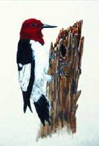 Описание: Замечательный альбом, содержащий рисунки цветов, птиц и.