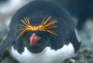 pinguine feinde