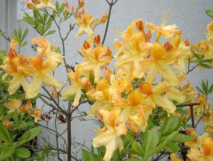 blumen in flowerpix image - photo #40
